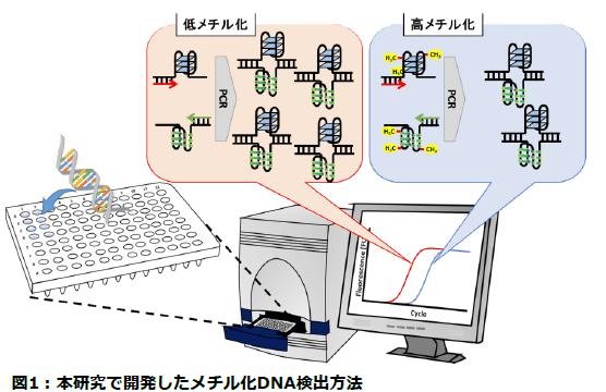がんを簡単に調べられる新しいメチル化DNAの測定法を開発 -- 東京工科大学