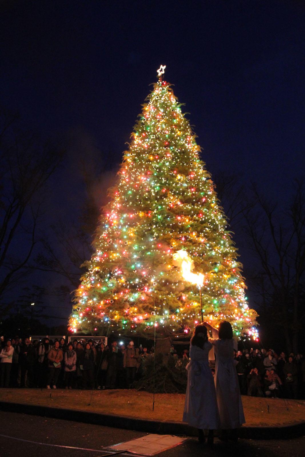 聖学院大学クリスマス点火祭 11月29日に開催 -- 埼玉県唯一のキリスト教系大学に煌くツリーが輝きます --