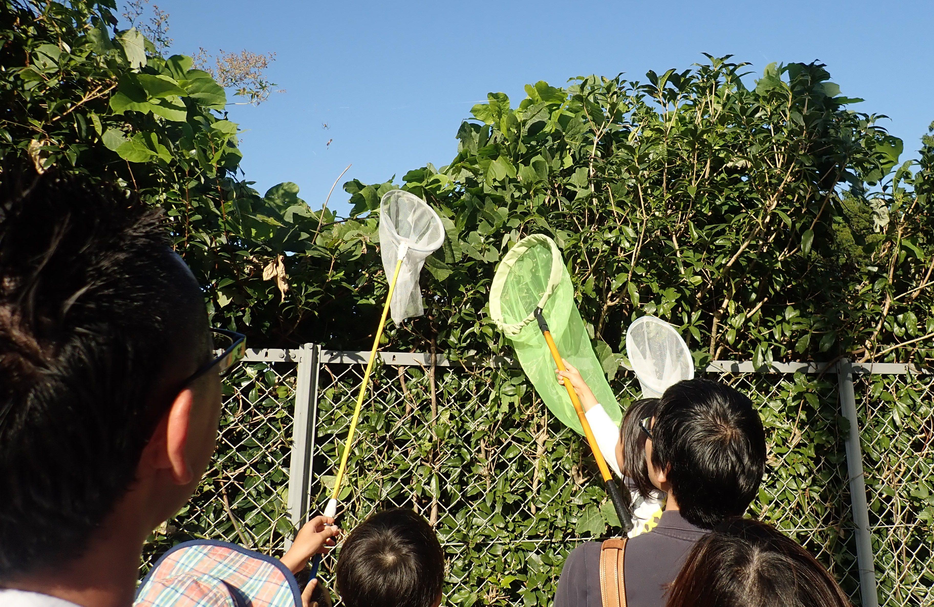 目指せ!未来の昆虫博士_農学部昆虫学研究室が研究室見学・体験ツアーを開催