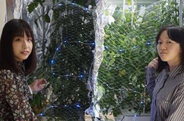 徳島文理大学理工学部の梶山博司教授がトマトの収穫量を2倍にできるLEDライトを開発