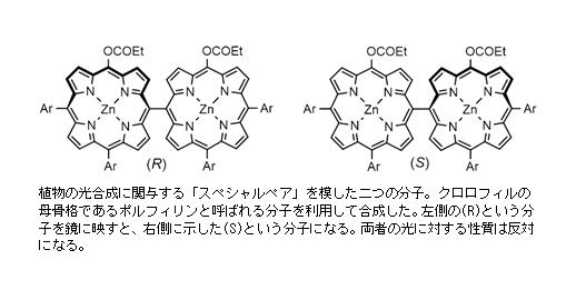 世界初!クロロフィルの誘導体が二つ集まり、円偏光発光(CPL)が発現 -- 首都大学東京・近畿大学・北里大学