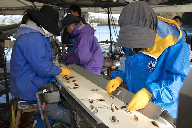 近畿大学水産研究所、養殖稚魚の選別をAIとIoTで効率化