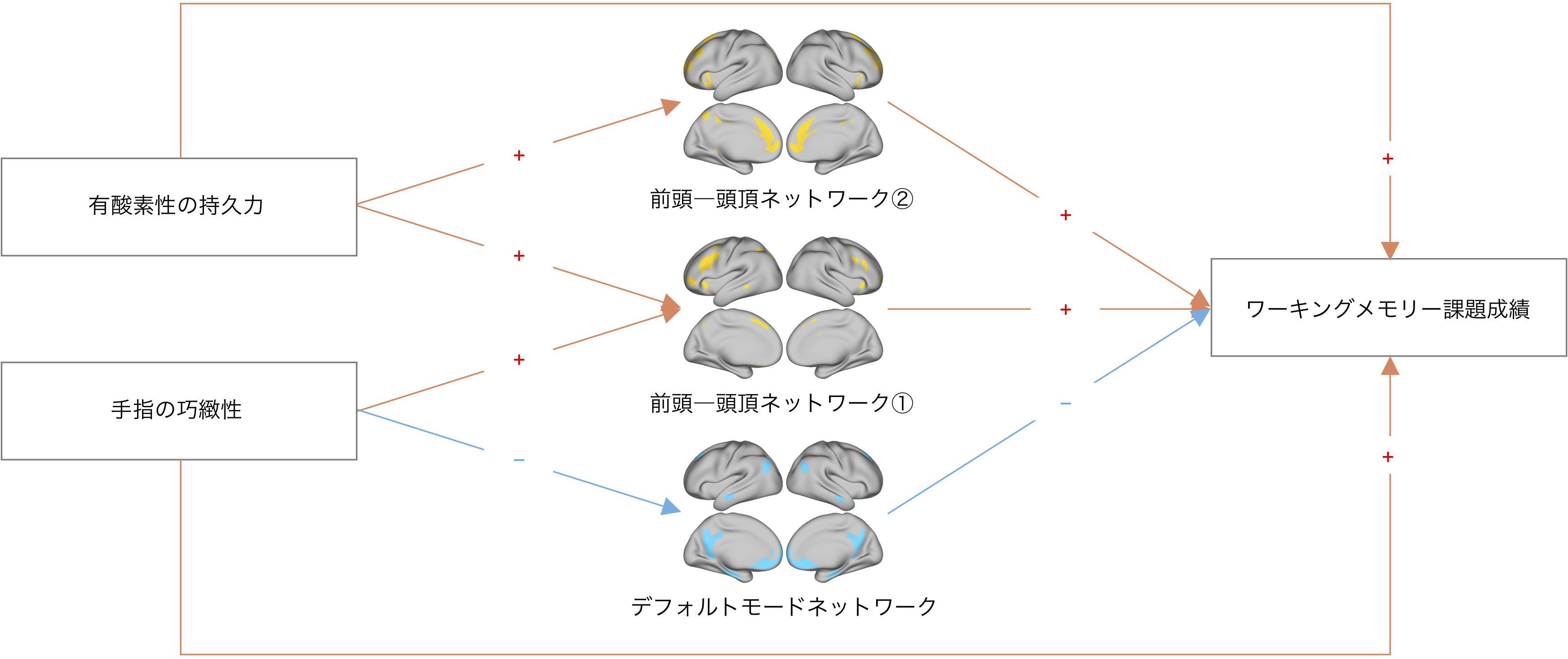 玉川大学脳科学研究所 研究成果「身体機能の高い人が、認知機能を高めている」脳の働きを解明 -- 科学雑誌''NeuroImage''に論文を発表