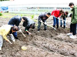 なにわ伝統野菜「吹田くわい」の収穫作業を実施します -- 大阪学院大学