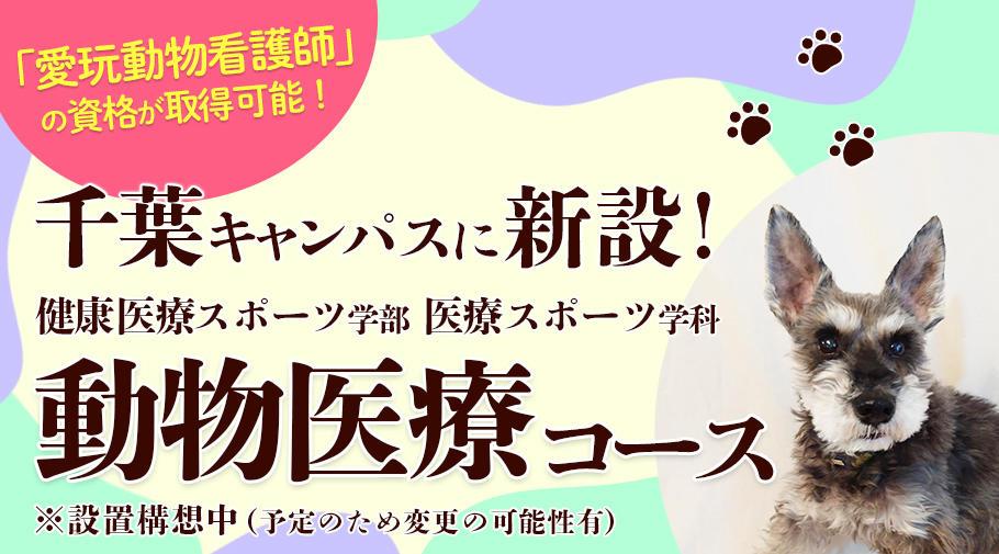 帝京平成大学が2022年度から千葉キャンパスに動物医療コースを設置 -- 新しい国家資格「愛玩動物看護師」に対応したカリキュラムをスタート